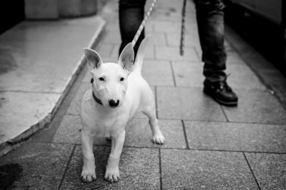 Dogma at Street